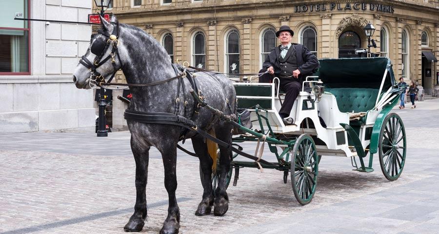 Cosa vedere a Montreal: carrozza con cavallo