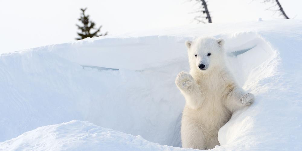 tour avvistamento orsi in Canada