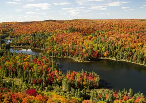 autunno in Canada Algonquin Park