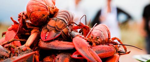 tra le più buone al mondo sono le aragoste di Prince Edward Island in Canada