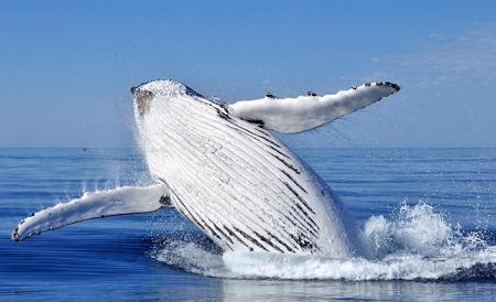 avvistamento balene in provincia di New Brunswick Canada