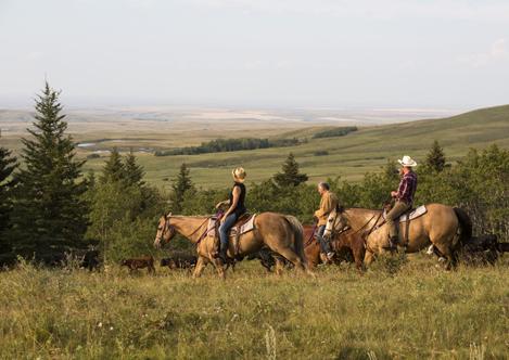 vaste praterie in provincia Saskatchewan