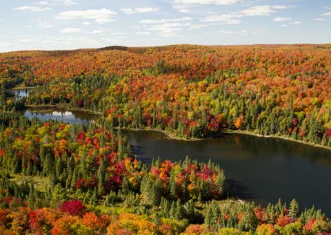 Ontario Canada bosco