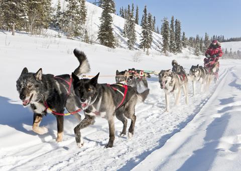 Yukon in Canada nord