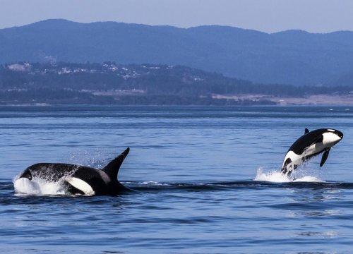 tour avvistamento balene in Canada
