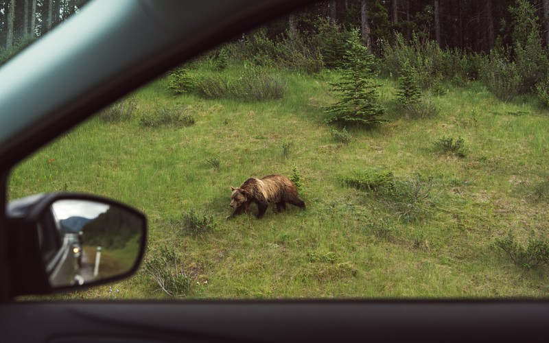 un viaggio incredibile lungo una strada leggendaria, dove gli animali sono più che le auto