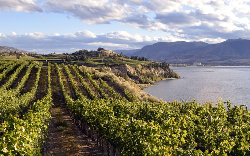 laghi, fiumi e colline piene di vigneti in questa splendida zona della British Columbia
