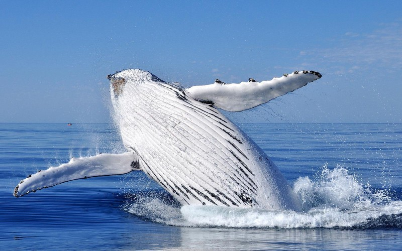 il fiordo di Saguenay, le balene, i tour in gommone e un territorio splendido