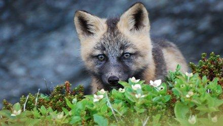 vedere animali selvatici al Liscombe Game Sanctuary a Nuova Scozia